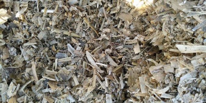 发酵玉米青贮
